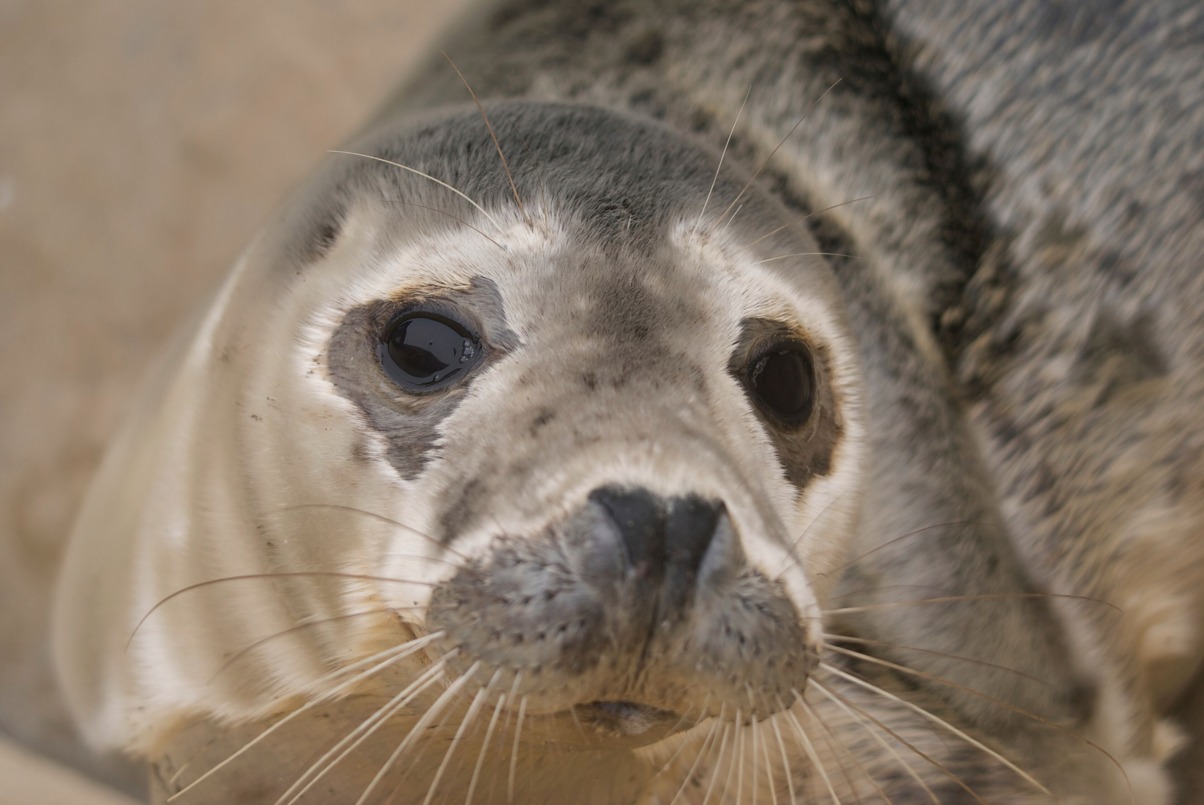 Seal Close-up
